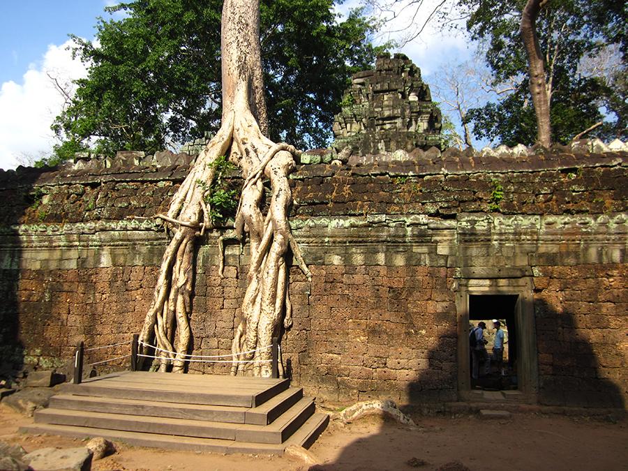 Ta Prohm temple, Angkor, Cambodia 6