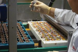 Chocolate Easter eggs from inside a chocolate factory