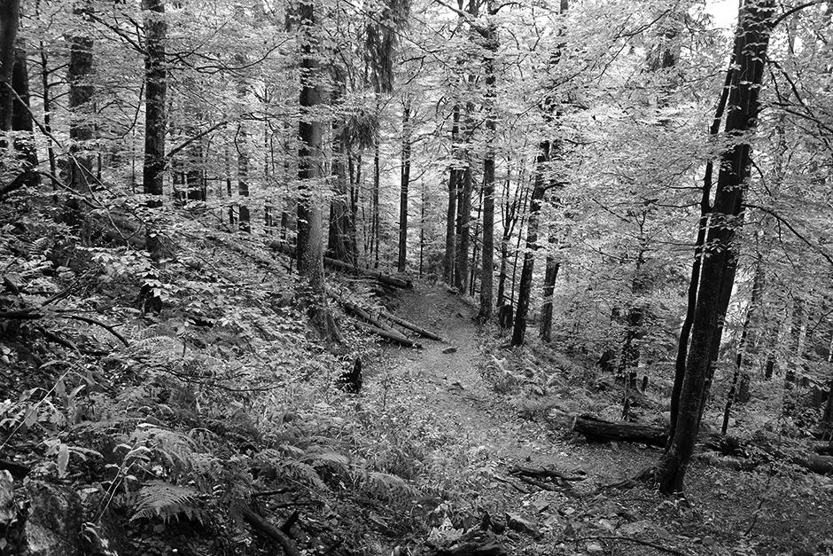 Black Forest (Schwarzwald)
