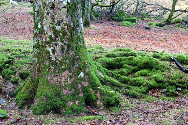 Scotland moss