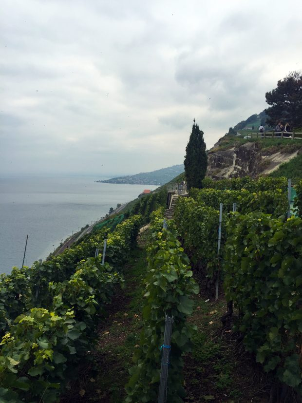 Lavaux Vineyards - UNESCO World Heritage Site