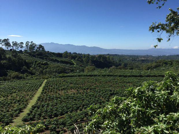 Costa Rica - Coffee