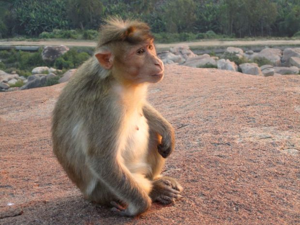 Monkey Temple, Hampi, India